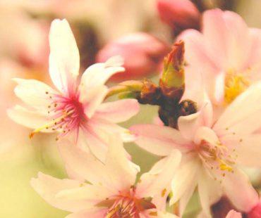 Frühjahrsbotschaft und Ostern